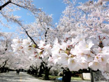 私の大学自慢と口コミ「東工大に通っている私の大学自慢聞いてください!」Vol4 東京工業大学